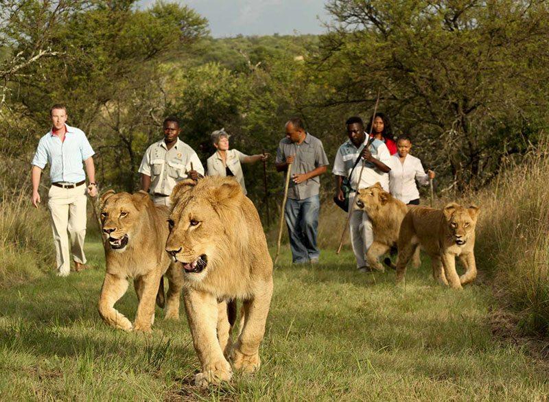 casela park safari mauritius