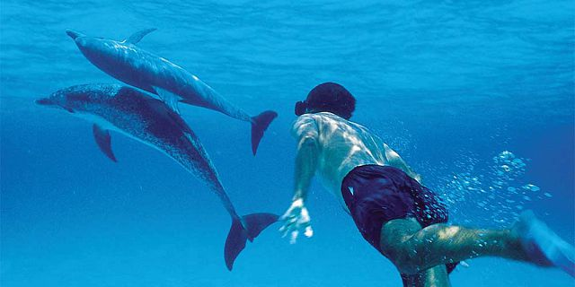 mauritius swimming with dolphins